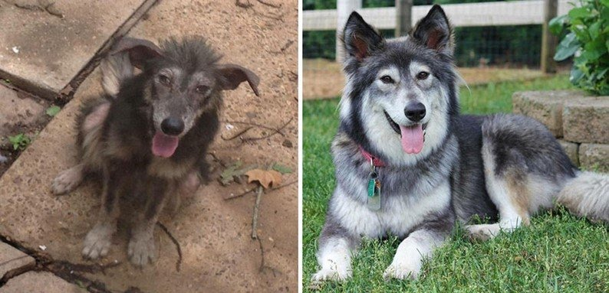 Cachorros adotados 4
