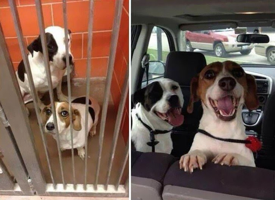 Cachorros adotados 5