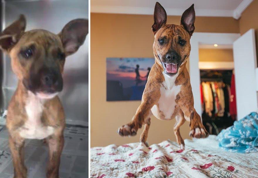 Cachorros adotados 7
