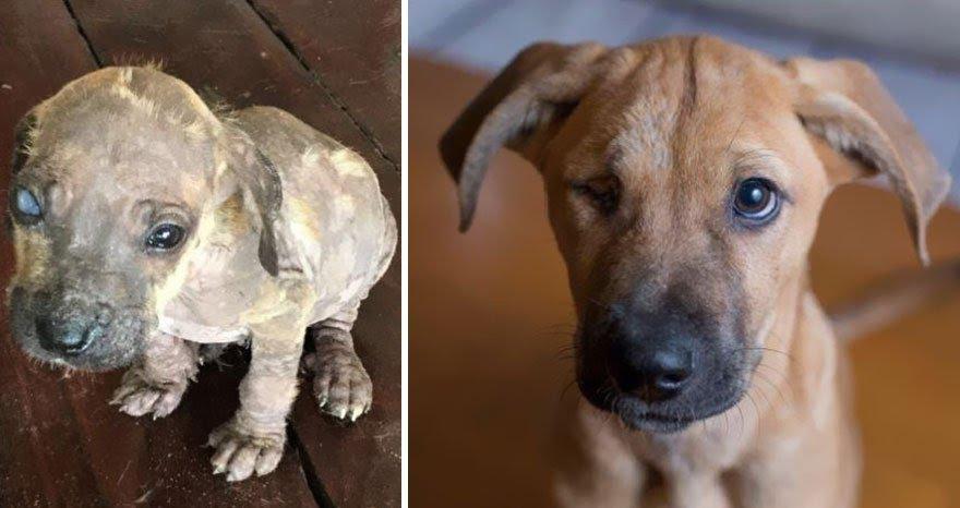 Cachorros adotados 10