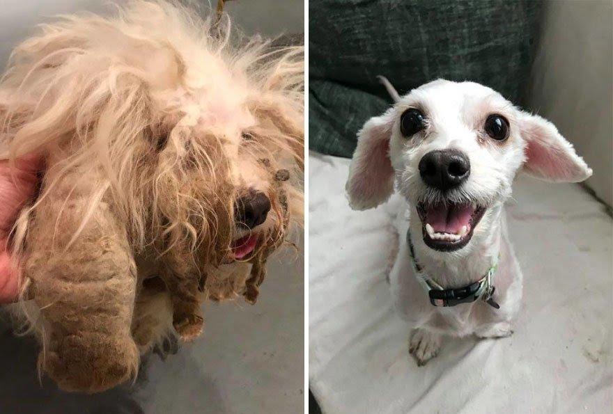 Cachorros adotados 13