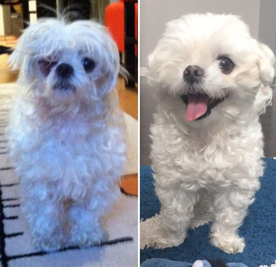 Cachorros adotados 17