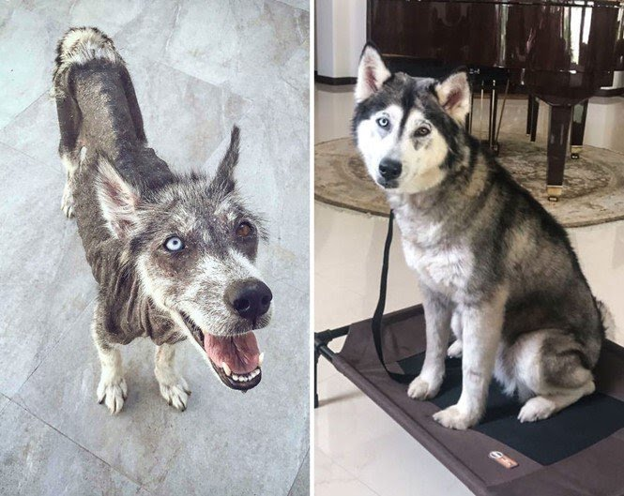 Cachorros adotados 3