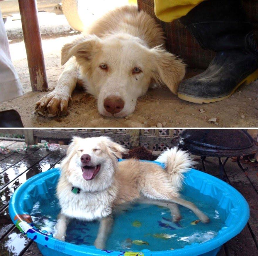 Cachorros adotados 6