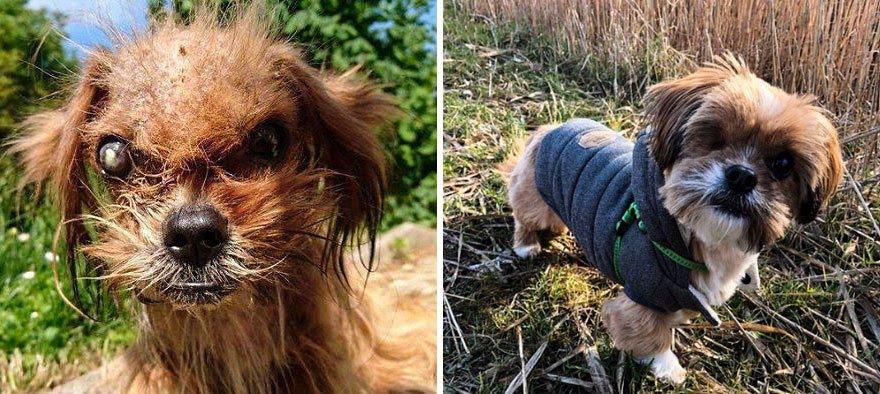 Cachorros adotados 19