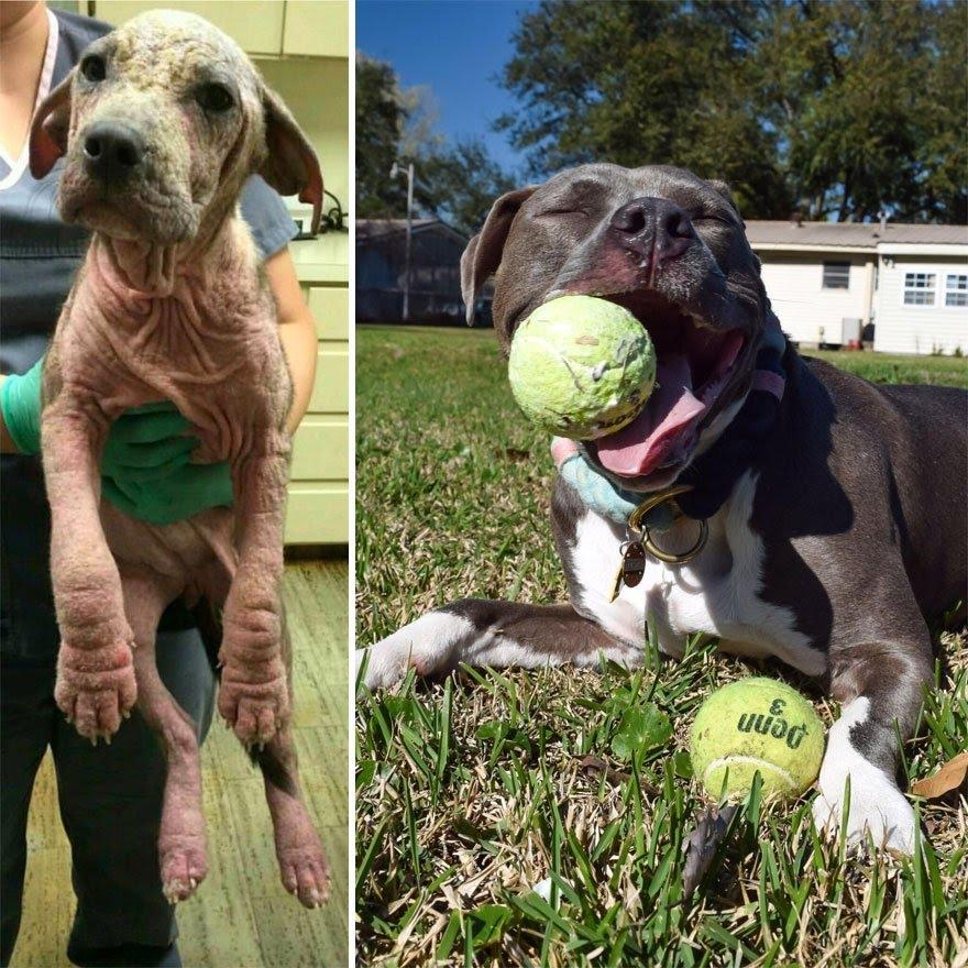 Cachorros adotados 14